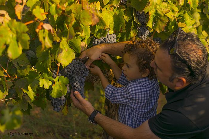 El encanto de una bodega familiar que mima las viñas
