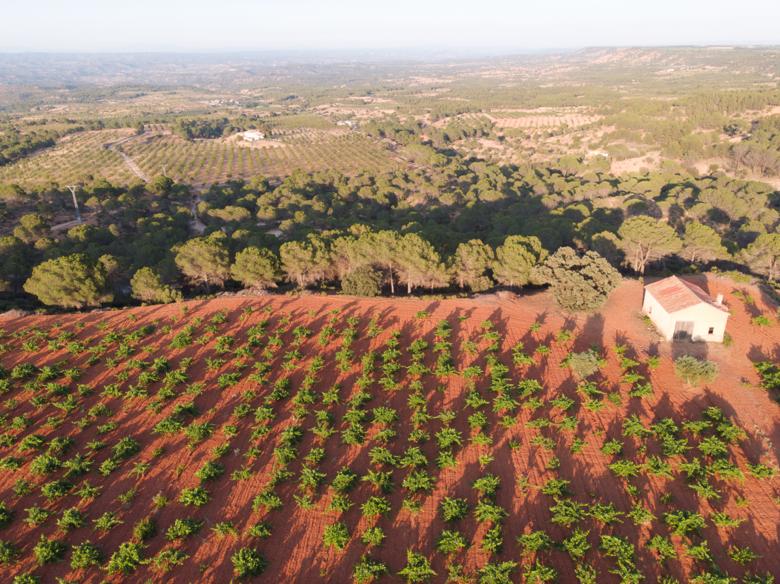 Viñedos en un entorno privilegiado, El Valle del Cabriel (Reserva de la Biosfera)
