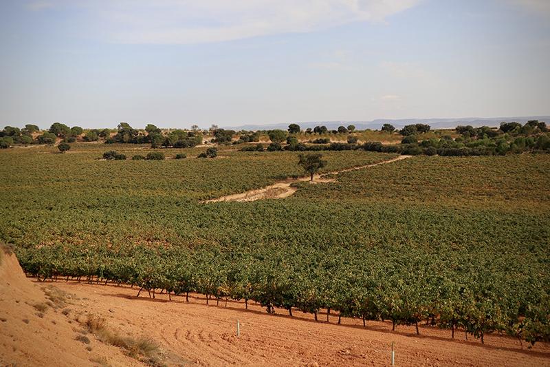 Bodegas González Cabezas se ubica en Casas Ibáñez (Albacete)
