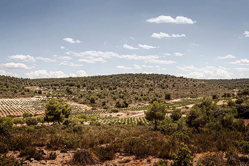 Cien y Pico se ubica en Mahora, provincia de Albacete