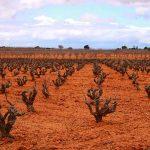 La Ruta del Vino de La Manchuela, ideal para conocer los vinos de la Denominación de Origen Manchuela