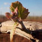 ¿Qué es un añada? Descubre este concepto del mundo vitivinícola